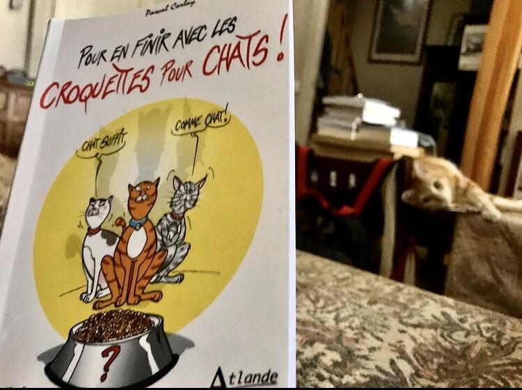 Le livre que j'aurais aimé avoir avec Balkis