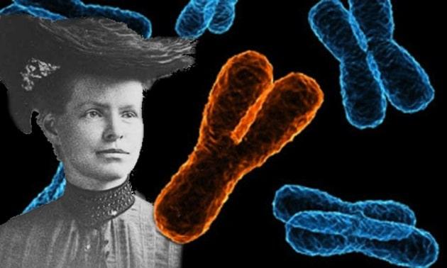 Nettie Stevens (1861-1912) une des Femmes de Sciences spoliées.