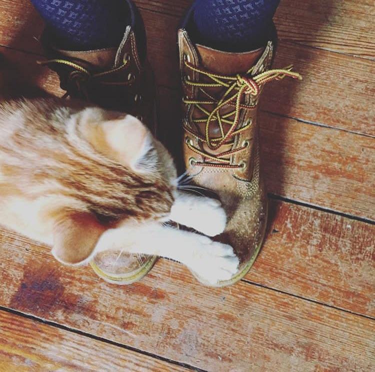 Timberland servant de griffoir à mon chat Clifton