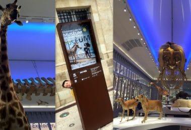 Welcome dans le Muséum de Bordeaux !