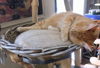 Arbre à chat paradis des serial cat blogueurs