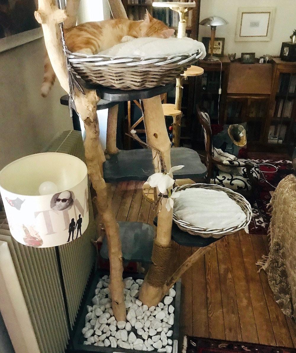 Le bel arbre à chat original de Clifton signé Julie Laguilliez