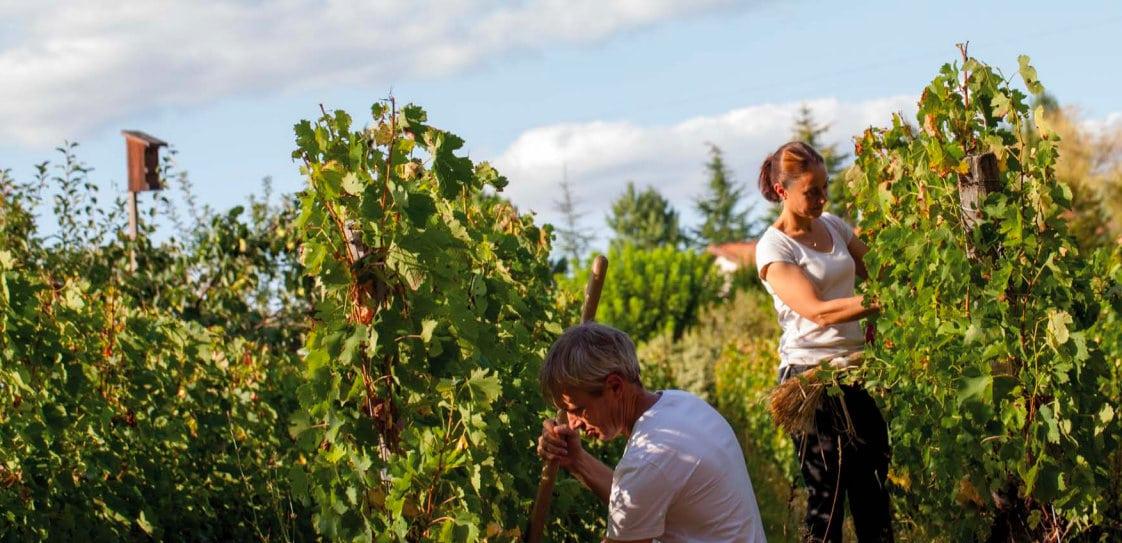 Delphine Vinet et son mari Benoit dans les vignes du domaine Emile Grelier