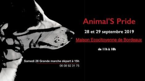 3ème édition pour l'Animal'S Pride à Bordeaux