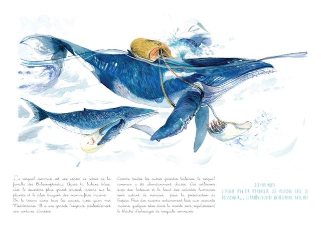 Exemple d'aquarelles mettant en scènes différentes espèces d'animaux menacées par l'activité humaine en Europe