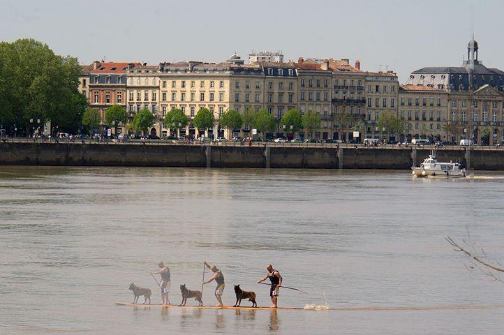 Paddle sur la Garonne