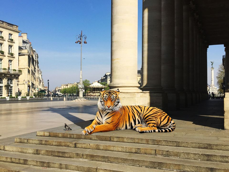 Le tigre et le pigeon au grand théâtre