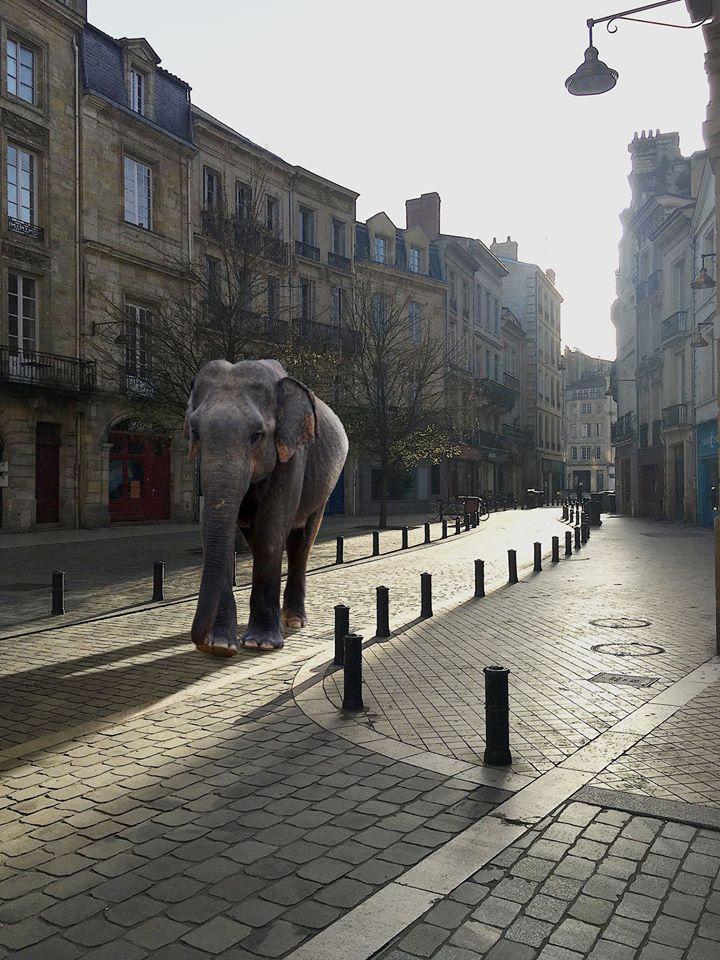 L'éléphant du bestiaire de Walid Salem