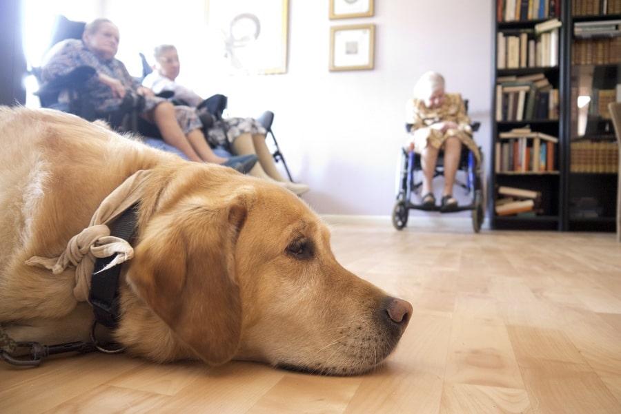 Quand la médiation animale fait du bien à nos anciens