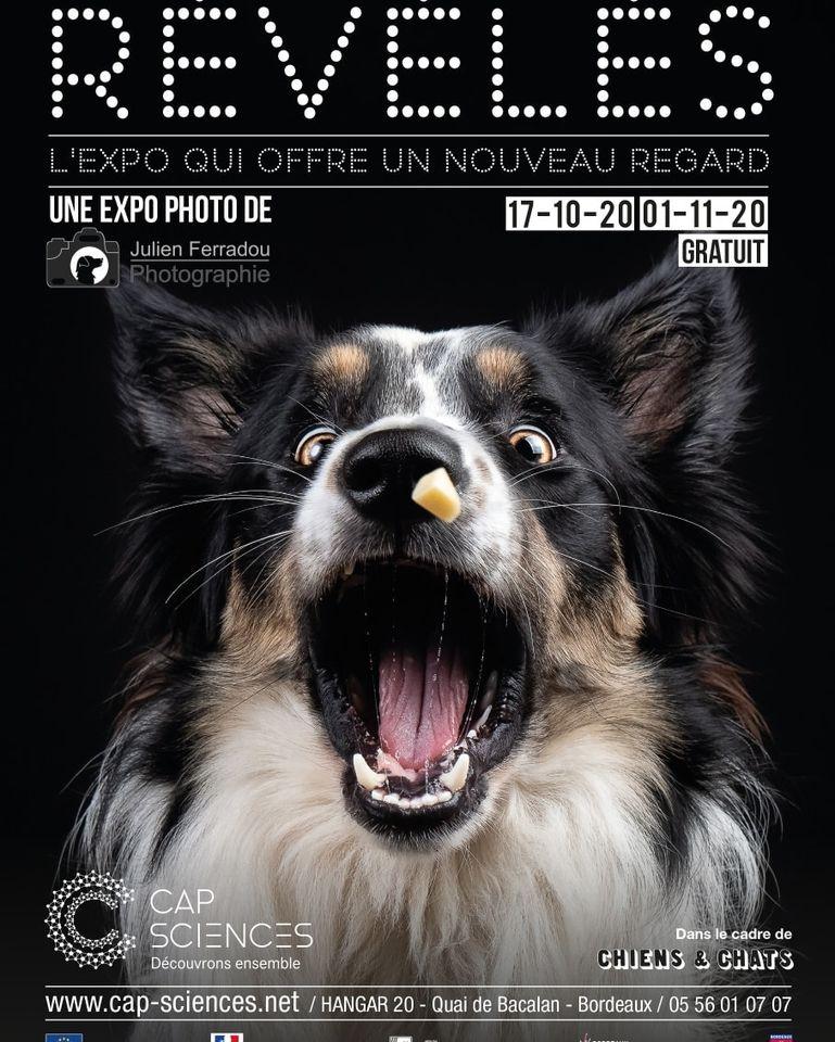 Révélés, une expo gratuite de photos de chiens (beaucoup) et de chats (un peu)