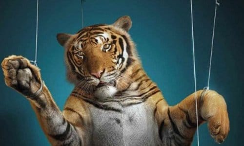 La fin des animaux dans les cirques
