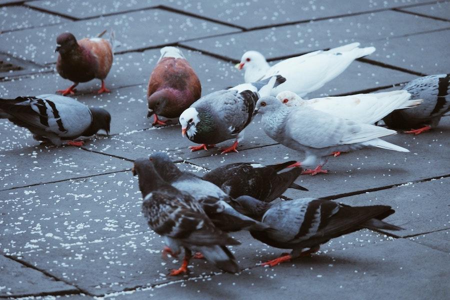 De la gestion et de la régulation des espèces invasives