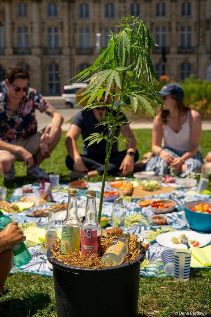 Boire BAGA entre amis lors d'un déjeuner sur l'herbe