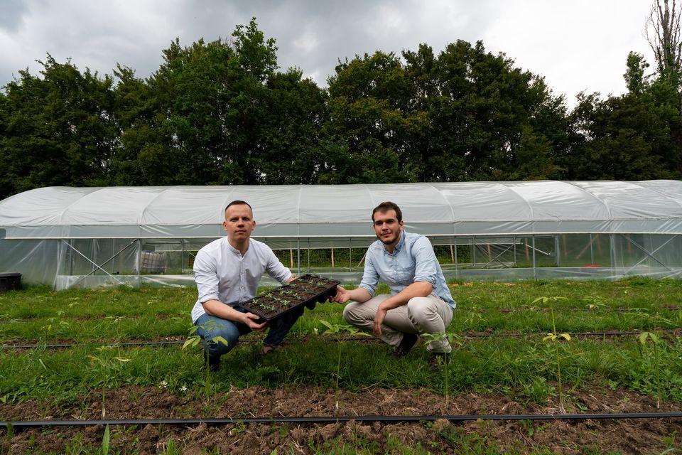 Développer une filière du chanvre en Nouvelle Aquitaine