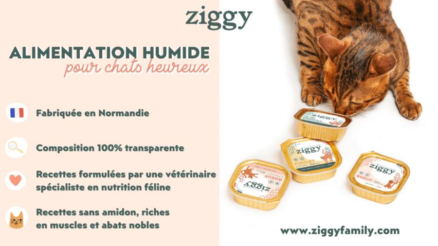 Les bonnes raisons de donner Ziggy à son chat