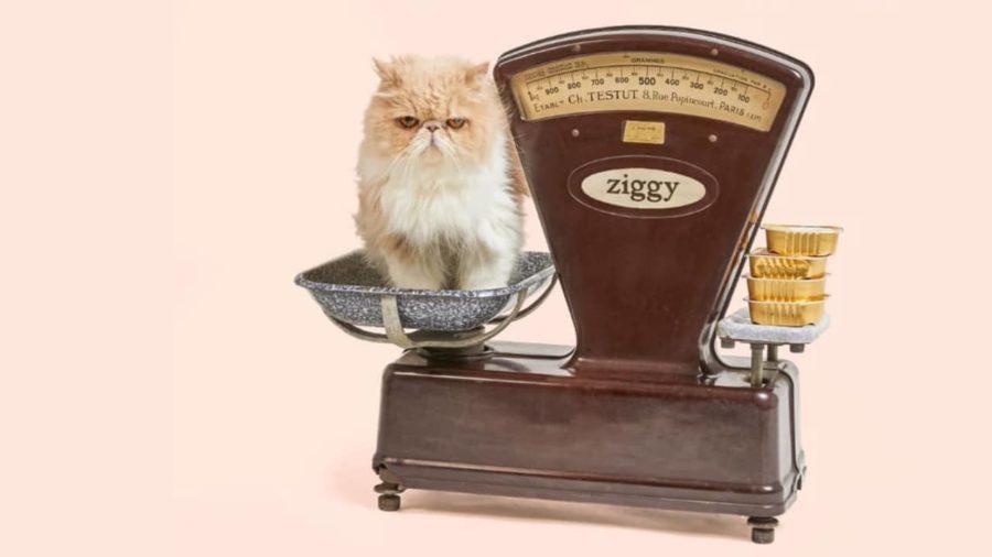 Ziggy, le gage d'une alimentation équilibrée
