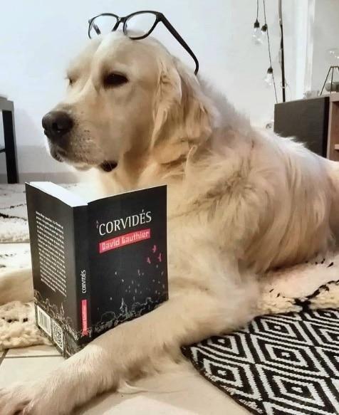 chien du journaliste david gauthier