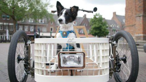 Le velo cargo, le meilleur ami du chien pour se déplacer