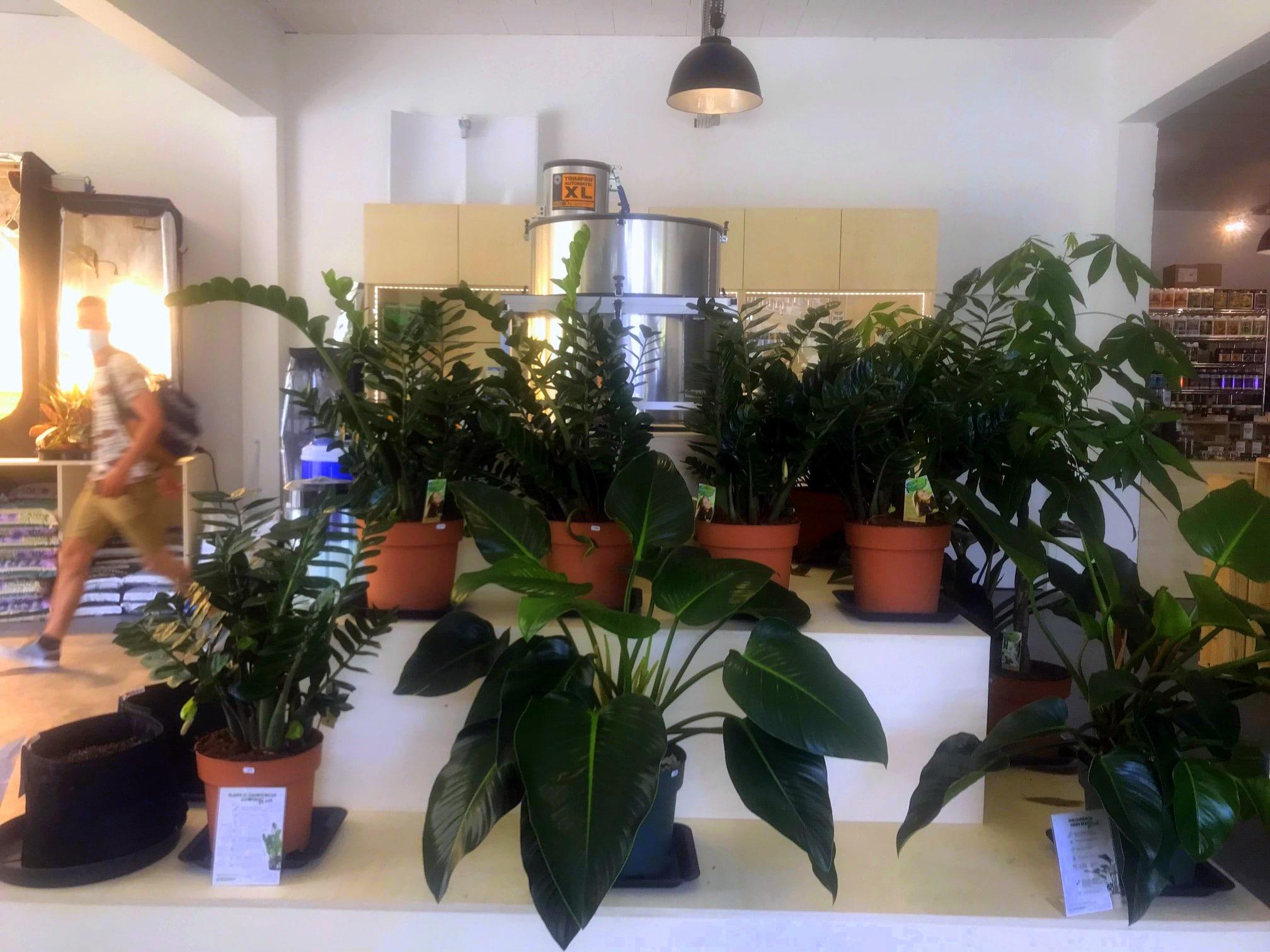 Des plantes pour végétaliser son intérieur