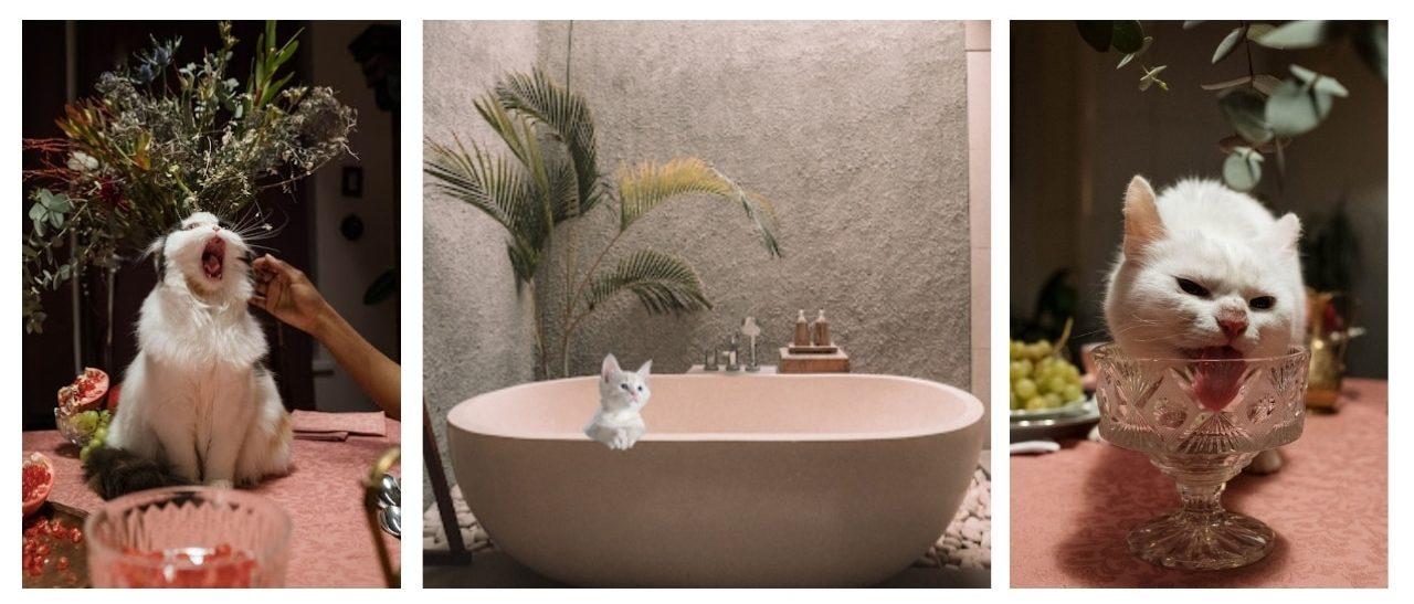 Hotel pour chats = Room service et calins assurés
