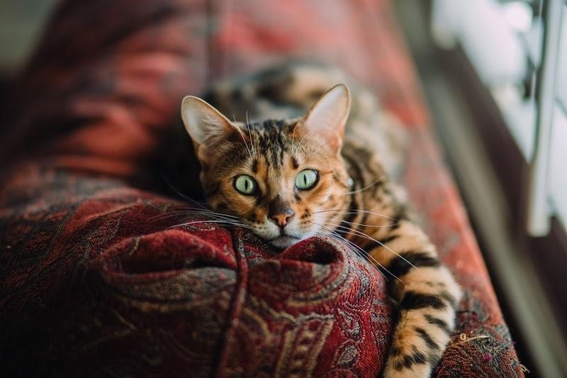 L'hotel pour chat, l'essayer c'est l'adopter