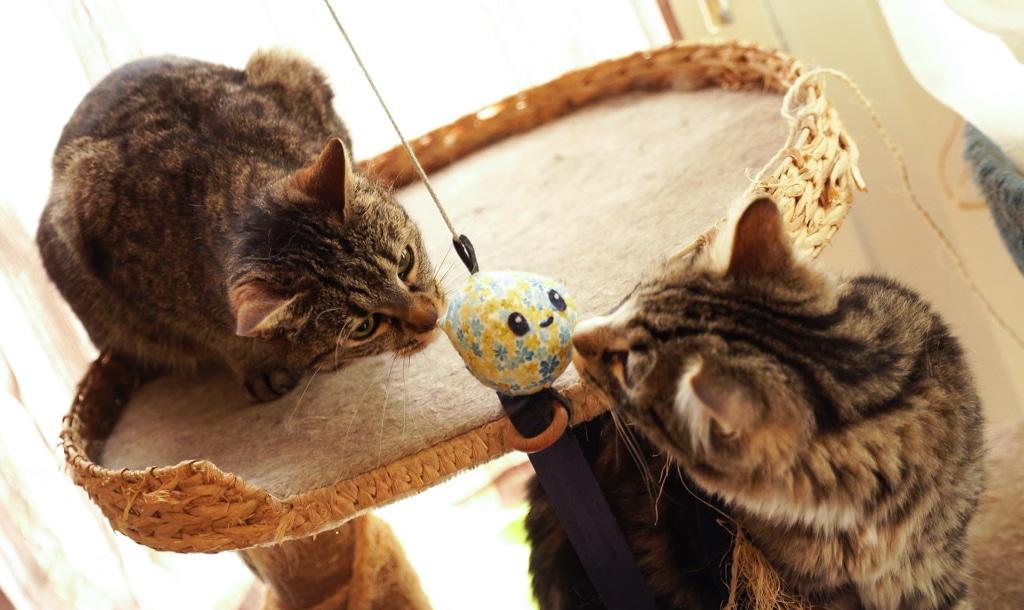 chats petits fripons jouant avec Poulpo